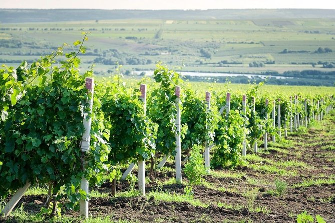 WINE Tour to Winery Château Purcari 2020 Moldova