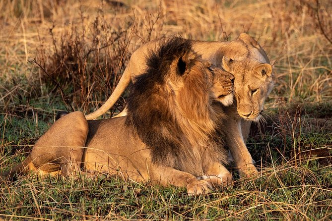 3 Days Big Five Safari in Masai Mara National Reserve, Kenya