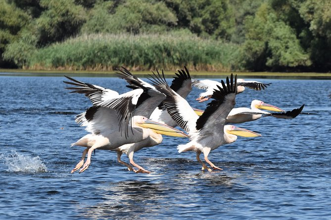 Discover Danube Delta from Bucharest - Private Tour for 5 Days photo 8