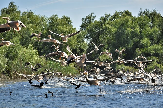 Discover Danube Delta from Bucharest - Private Tour for 5 Days photo 16