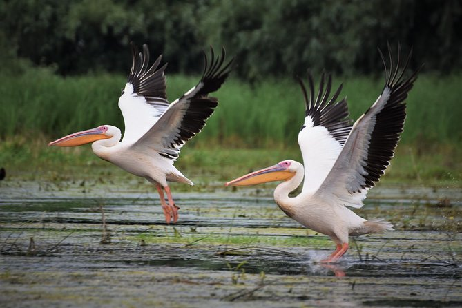 Discover Danube Delta from Bucharest - Private Tour for 5 Days photo 15