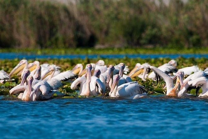 Private Tour in Danube Delta