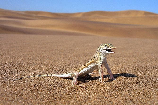 Private Highlights Of Namib Dunes Experience