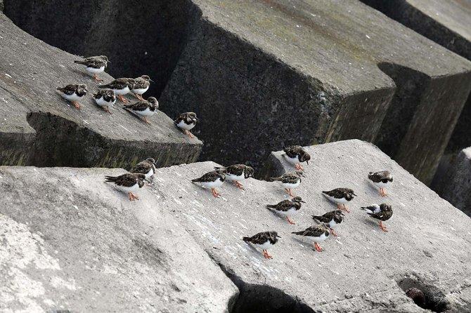 Azores Marine Birdwatching Expedition Tour