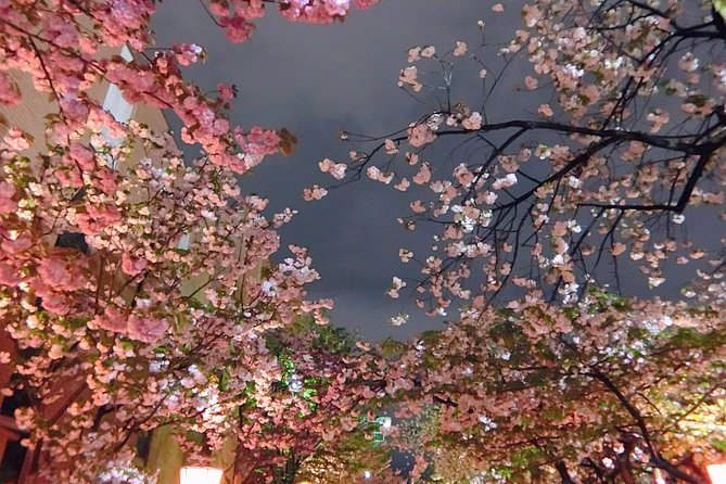 Evening Hanami (Cherry Blossom) Experience with a Local photo 12