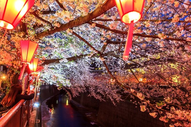 Evening Hanami (Cherry Blossom) Experience with a Local photo 26