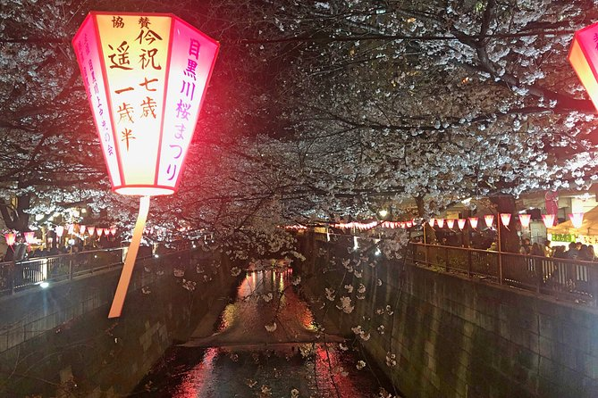 Evening Hanami (Cherry Blossom) Experience with a Local photo 4