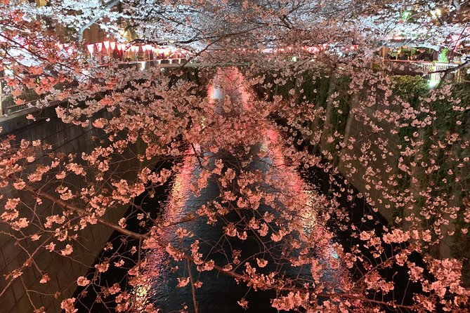 Evening Hanami (Cherry Blossom) Experience with a Local photo 16