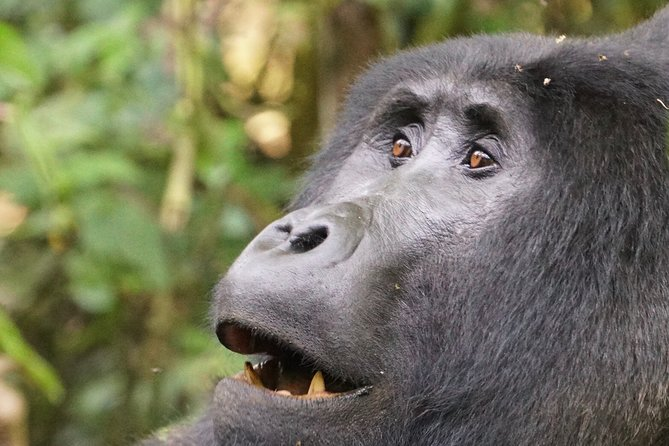 6-Day Uganda Private Primate Watching Safari with Meals