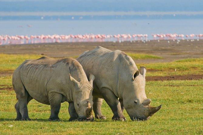 4 Days, 3 Nights – Lake Nakuru and Maasai Mara Safari