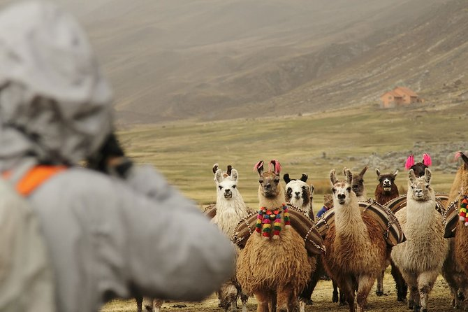 5-day Cusco Trekking and Machu Picchu tour with 2-star hotel