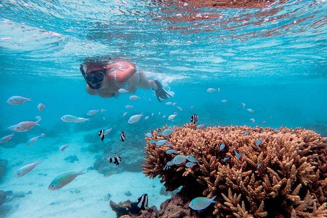 Semi-Private Lagoon Snorkel Tour