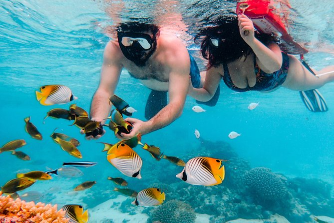 Private Lagoon Snorkel Tour