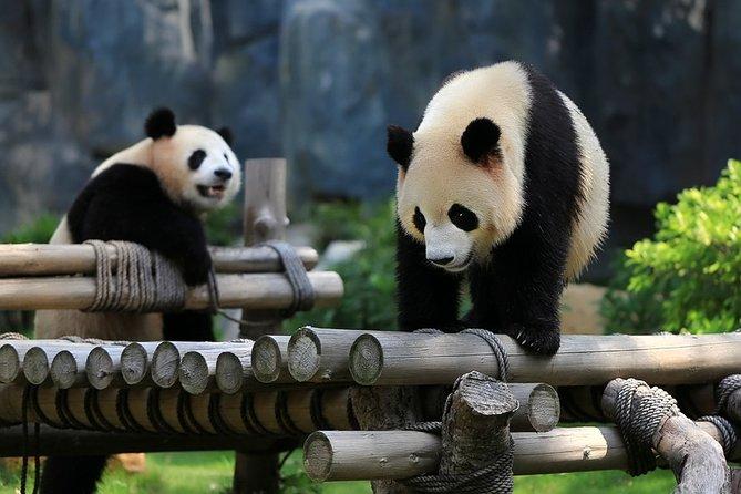 Chengdu - Leshan - Mt. Emei 5 Days tour