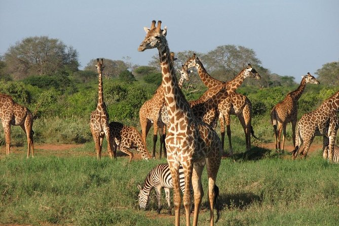 Tsavo West National Park 2 Days 1 Night Safari