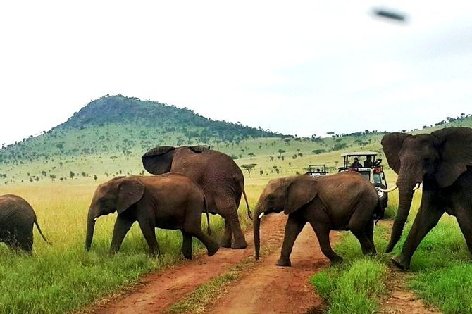 12-Days Best of Kenya Wildlife Jeep Safari - High End