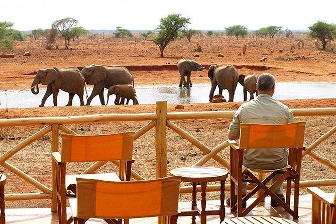 1 Day Ngutuni Wildlife Conservancy Excursion