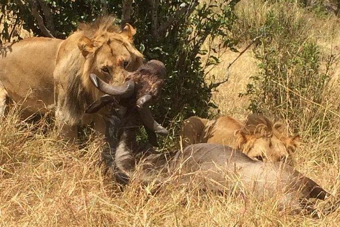 12 Days Samburu Ol-pejeta lake Nakuru Masai Mara lake Naivasha Amboseli safari