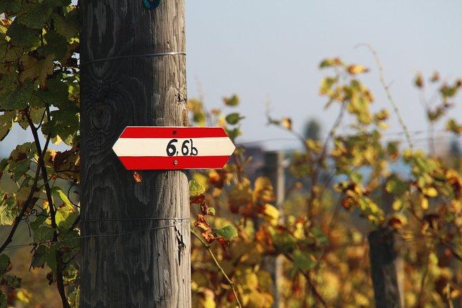 Wine tasting tour through Austria
