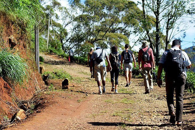Hike to Single Tree Hills