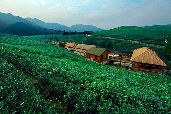 Half-Day Hangzhou Tianzhu Buddhist Mountain Hiking Tour with Green Tea Village