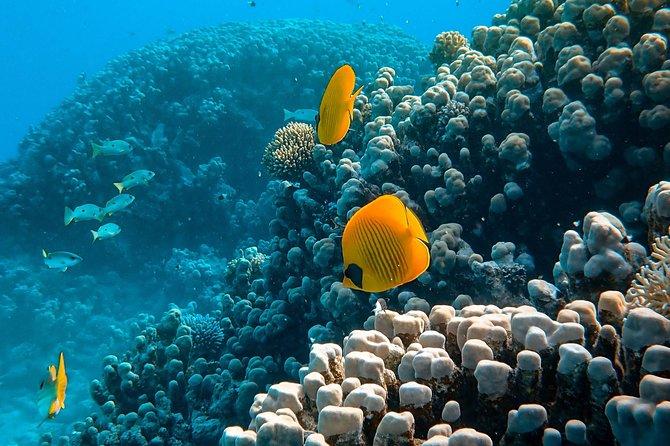 Maafushi: Snorkeling and South Male exploration