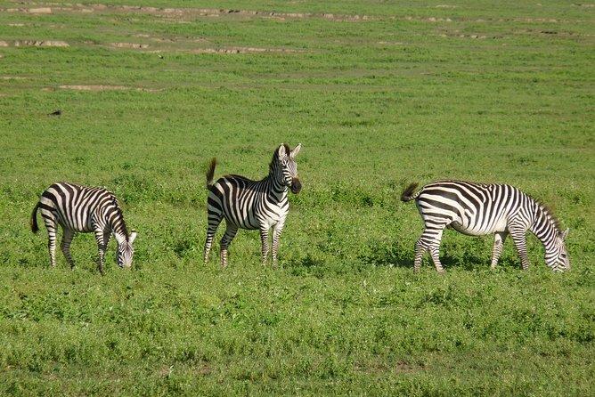 4 Days Lodge Safari