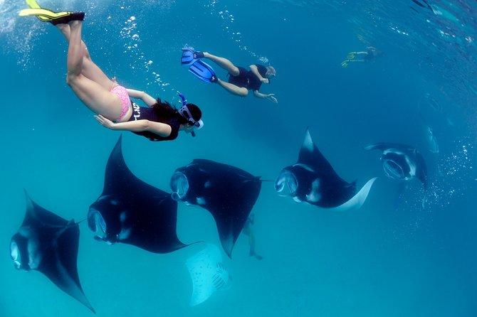 Maafushi: Snorkeling private custom tour