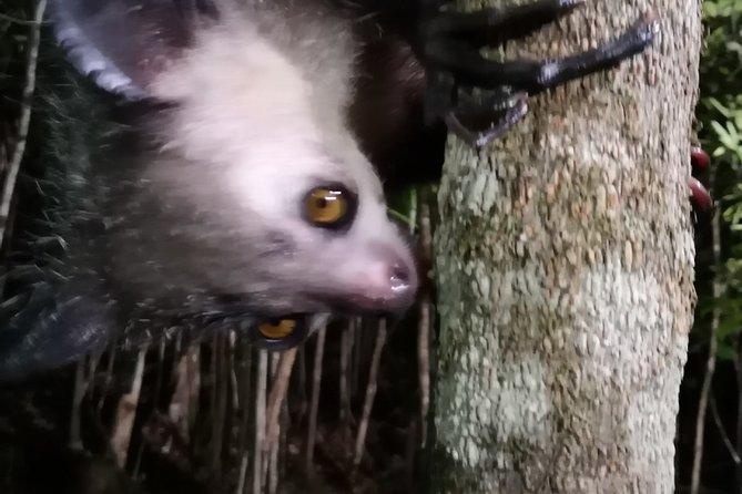 Madagascar Wildlife Tour 14D/13N