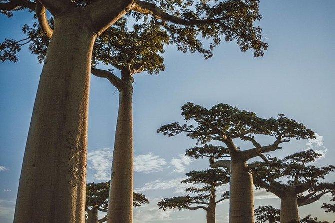 15 Days details Madagascar