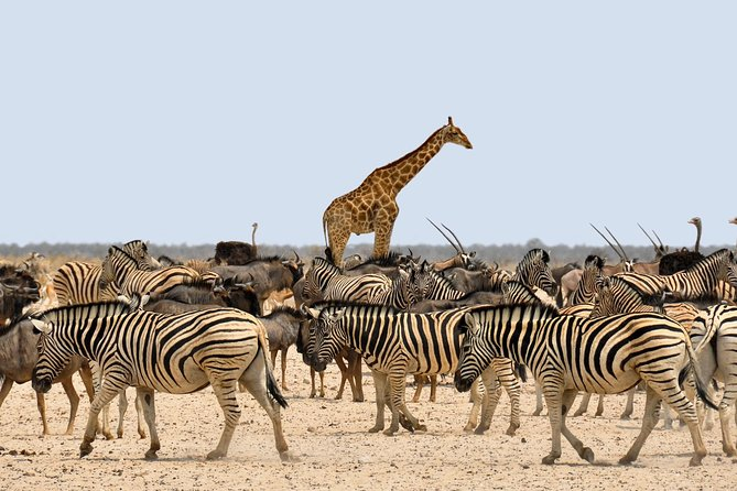 Etosha Express Safari 3 Days / 2 Nights