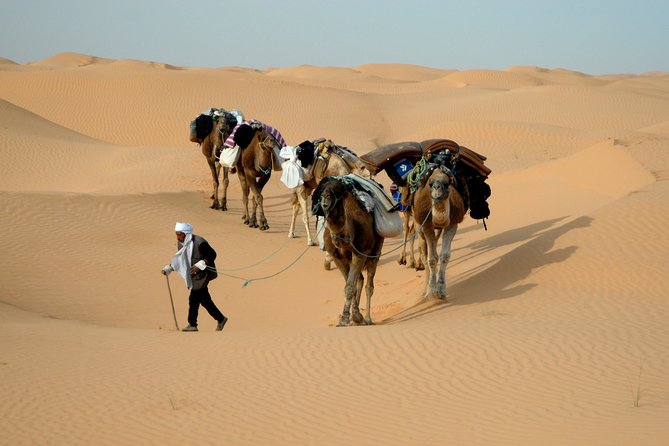Camel riding Adventure at Great Oriental Erg 7Days/ 6 Nights