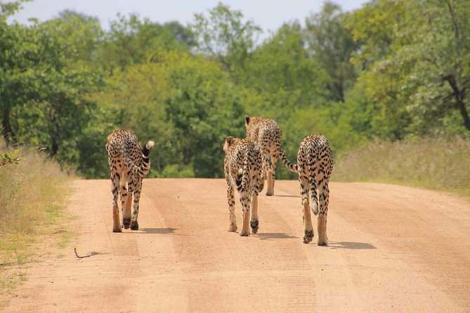 Day trip to Kruger from Maputo (Open vehicle)