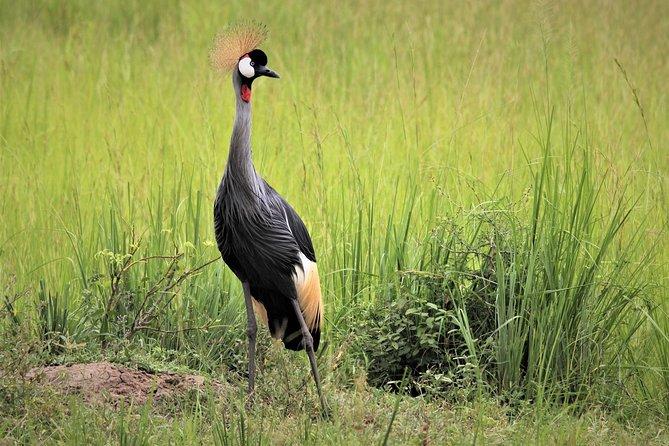 3 Days 2 Nights Murchison Falls Wildlife Safari