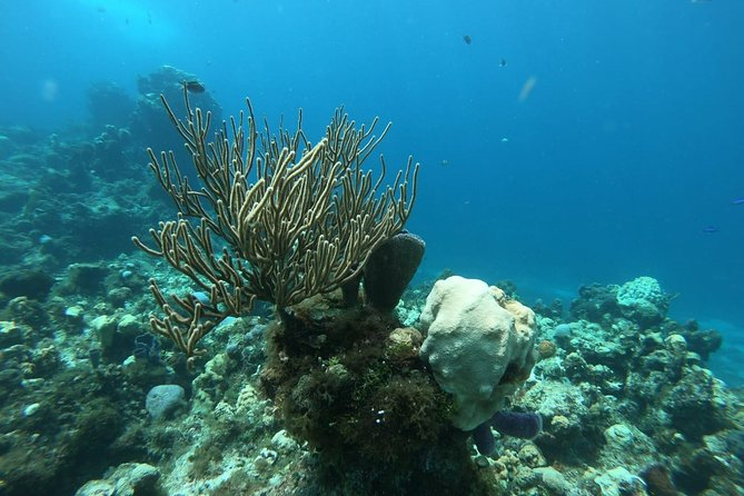 Snorkel Experience in Cozumel