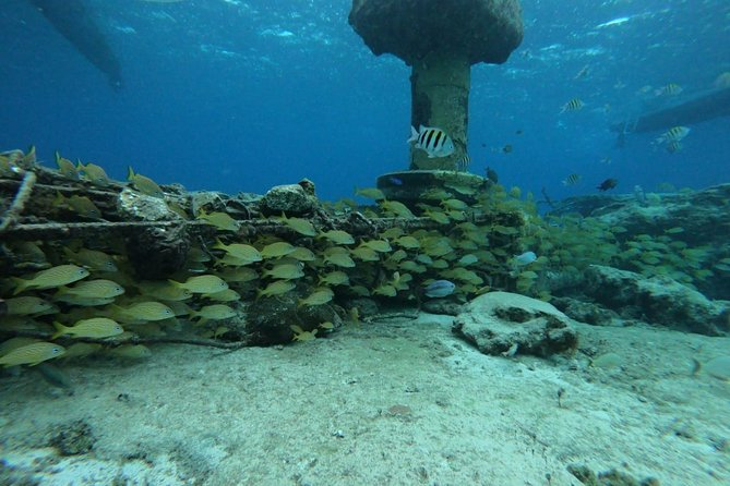 Cozumel Awesome Snorkel Experience