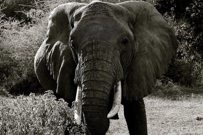 Explore to Tarangire, Ngorongoro Crater and Lake Manyara for 2 Days( Basic)