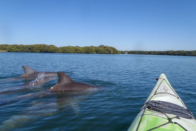 Adelaide Dolphin Sanctuary unique small group kayak with lunch