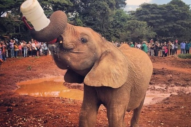 Full-Day Private Tour with Game Drive and Elephant Orphanage