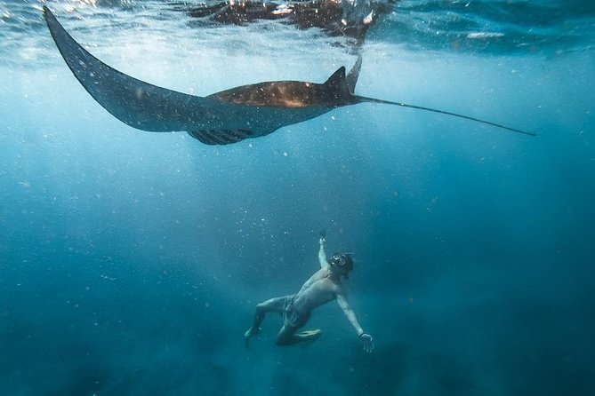 Nusa Penida Private Snorkeling With Manta