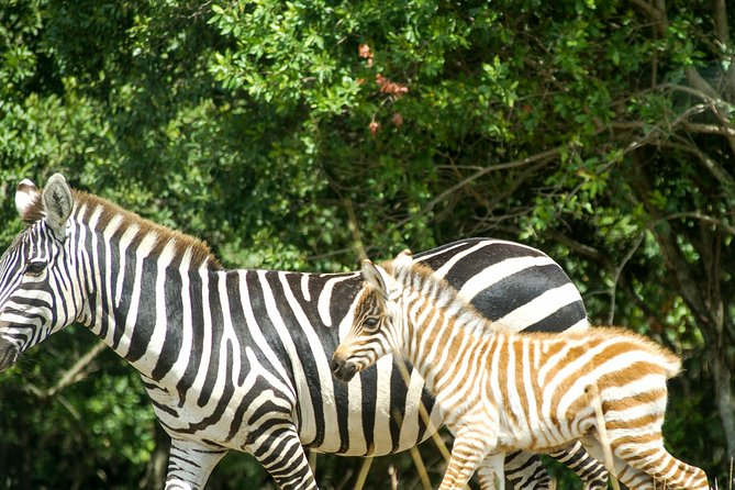Shimba Hills Day tour from Mombasa / Diani