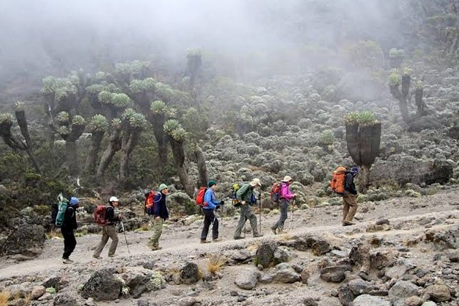 9-Day Trek Tour to Mount Kilimanjaro by the Northern Route