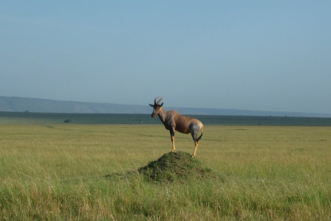 7 Days Safari to Maasai Mara , Serengeti and Ngorongoro Conservancy in Tanzania.