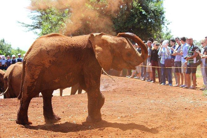 Private Tour: Karen Blixen, Elephant Orphanage & Giraffe Center Trip