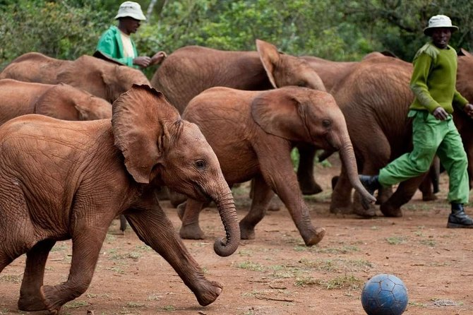 Private Full-Day Guided Tour: Giraffe Center and Elephant Orphanage