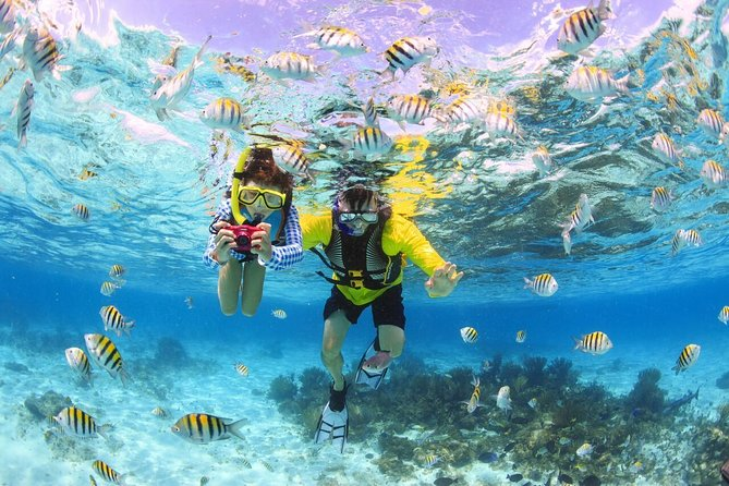 Maafushi: Half day snorkeling, Dolphin watching and Sandbank trip