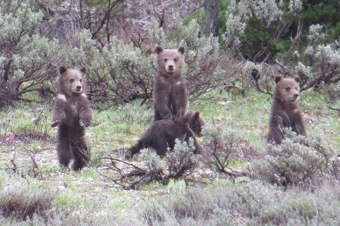 Grand Teton National Park - PRIVATE Sunrise Tour from Jackson Hole
