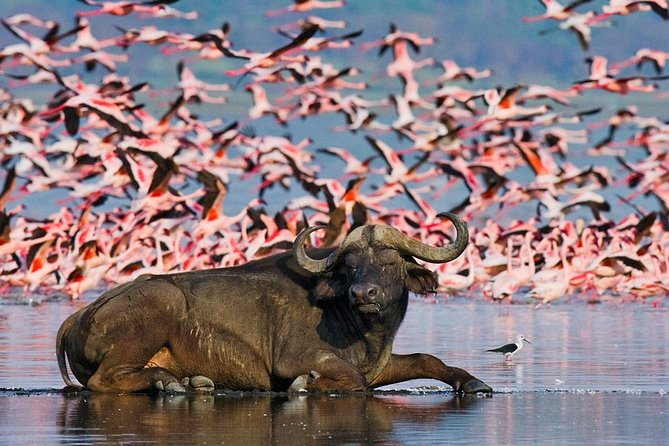 2 Days 1 Night Lake Nakuru Safari