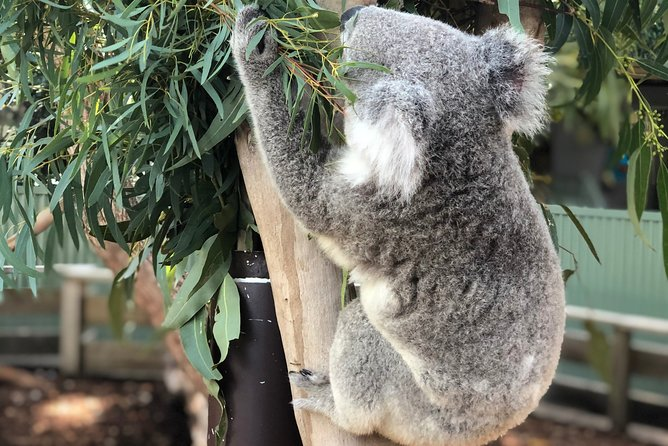 Private Blue Mountains and Wildlife Park Tour from Sydney with Barbecue Lunch