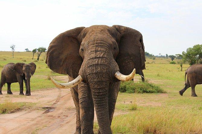 3-Day Private Guided Safari Tour of Tarangire and Ngorongoro